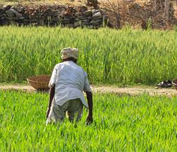 Bild Mikrofinanz